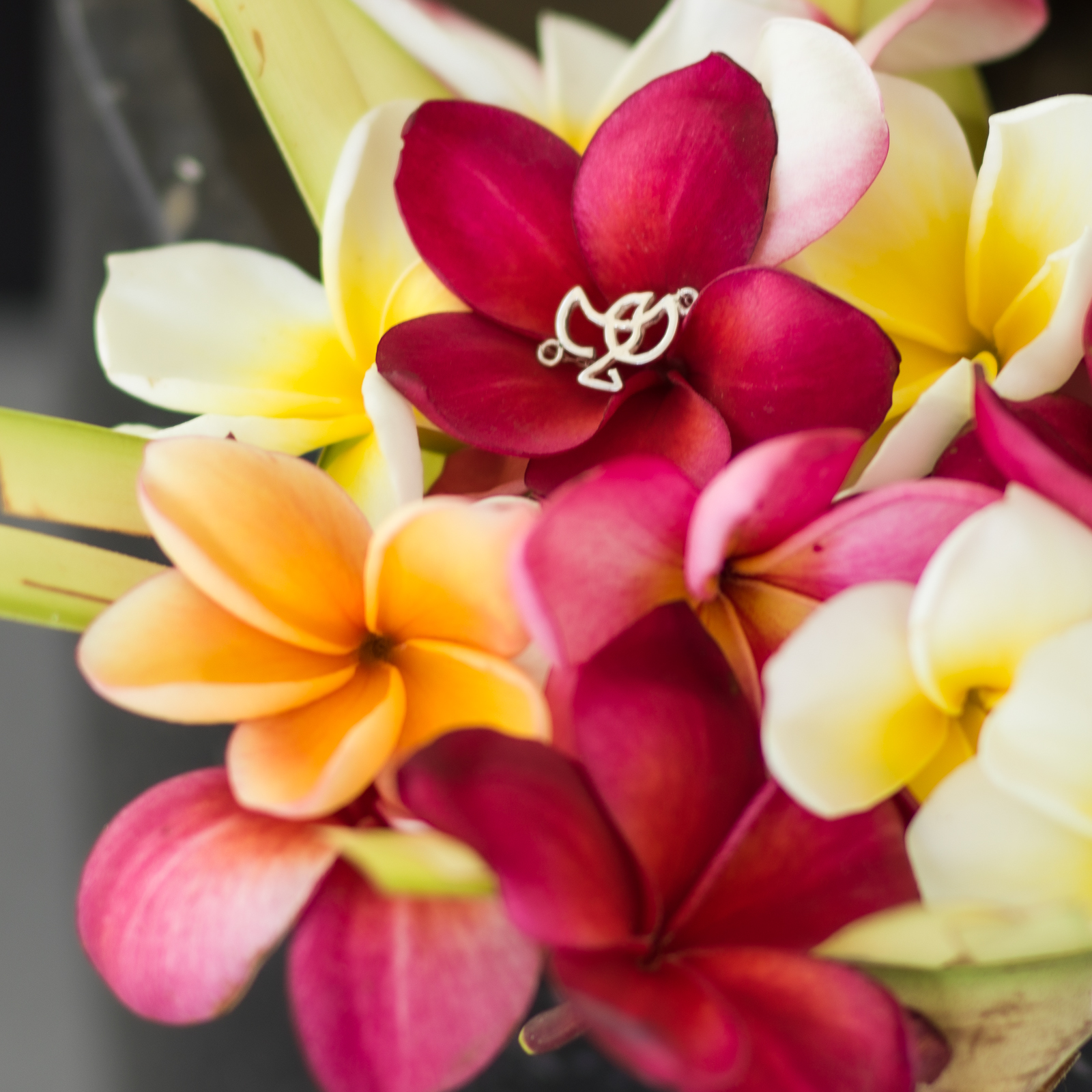 Frangipani flowers with the bird icon. Detail of our silver bracelet of the Forever Label.